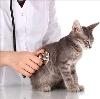 Ветеринарные клиники в Ленске
